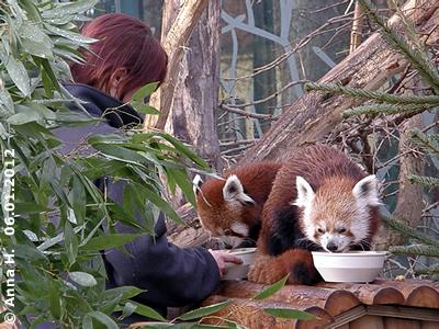 Pandas und Nicole