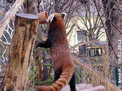 Topf mit Panda