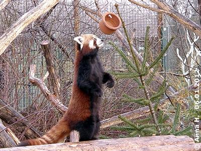 Panda und Topf