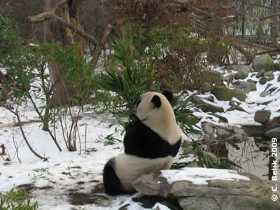 Yang Yang, 16. Januar 2009