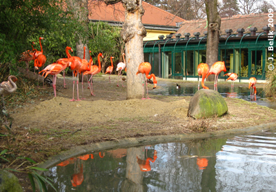 Flamingos genießen das schöne Wetter, 7. Februar 2009