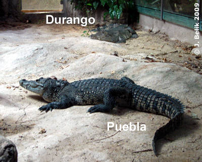 Puebla und Durango, 27. Februar 2009