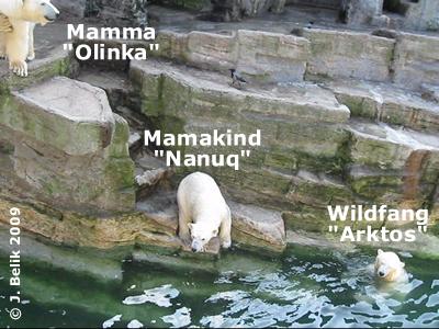 Olinka, Arktos und Nanuq, 3. April 2009