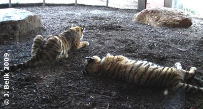 Ina & Kyra, 3. April 2009
