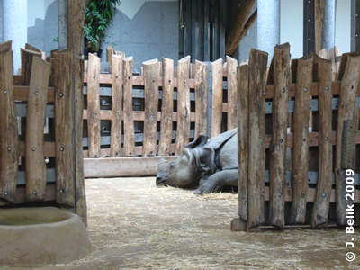 Hier schläft Jange in jenem Teil der Innenanlage, der gesondert abgetrennt werden kann, 16. Juni 2009
