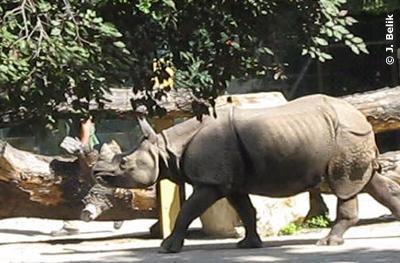 Sundari folgt brav ihrem Betreuer ab, 23. Juli 2009