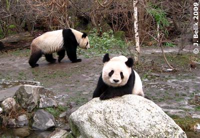 Long Hui (vorne) und Yang Yang, 23. Dezember 2009