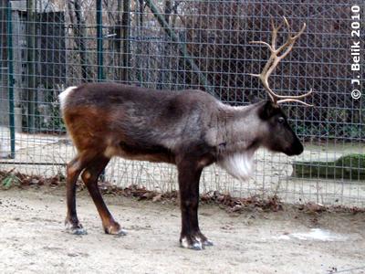 Rentier, 2. Jänner 2010