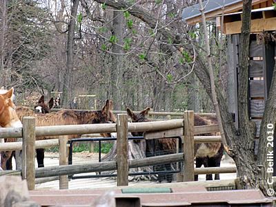 Aurelia, Odette, Amelie sind jetzt bei den Pferden untergebracht, 28. März 2010