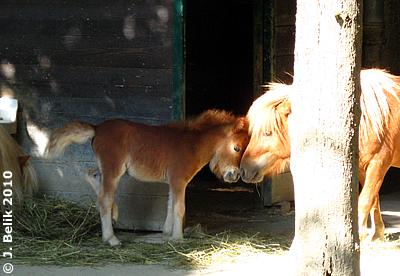 Pia und ihr Baby, 3 Wochen alt, 28. Juli 2010