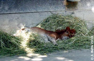 So ein Zwergerl braucht noch viel Schlaf! Pias Baby, 3 Wochen alt, 28. Juli 2010