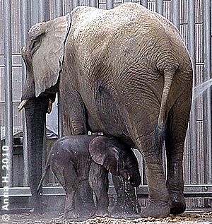Ganz geheur ist das feuchte Zeugs aus dem Schlauch dem Zwergi noch nicht! Mini-Eli mit Mama beim Duschen, 15. August 2010