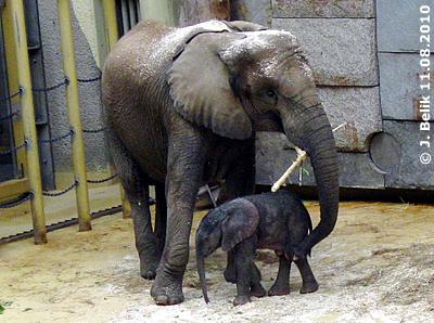 Numbi und ihr Zwergi, 11. August 2010