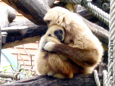 E.T. mit Mama Sipura, 23. Oktober 2010
