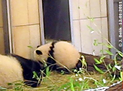 Wird das gezackte Rückenband Fu Hus Markenzeichen? !2. Jänner 2011 (Screenshot aus Video)