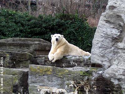 Tania, 16. Jänner 2011