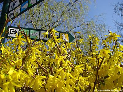 Der Frühling läßt grüßen ..., 29. März 2011