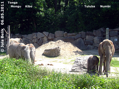 Mongu, Kibo, Tuluba und Numbi, 6. Mai 2011 (Screenshot von Video)