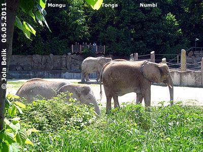 Mongu, Tonga und Numbi, 6. Mai 2011 (Screenshot von Video)