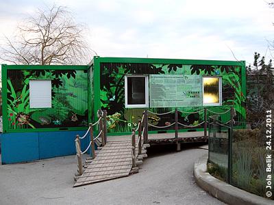 Das Zuhause der Winkerfrösche im Tiergarten, 24. Dezember 2011
