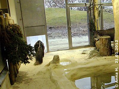 ... bis zum nächsten Mal, Herr Tapir und Frau Capybara! 21. Jänner 2012
