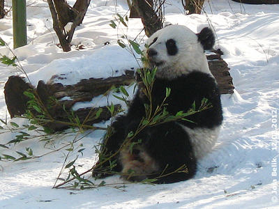 Fu Hu, 18 Monata alt, 12. Februar 2012