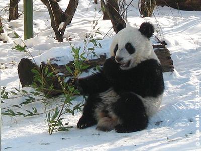 Fu Hu, 18 Monate alt, 12. Februar 2012