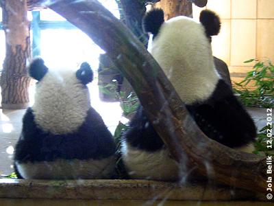 Fu Hu (li) und Yang Yang (re), 12. Februar 2012