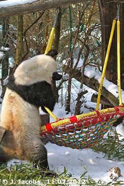 Long Hui, 11. Februar 2012