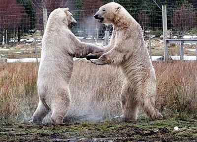 Arktos (re) und Walker (li) bei ihrem ersten Zusammentreffen, WHP Kingussie, 6. April 2012 (Foto: Jan)
