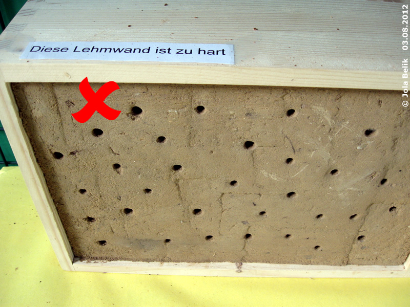 Die Lehmwand darf nicht zu hart sein, man sollte mit dem Fingernagel leicht etwas Lehm abkratzen können! 3. August 2012