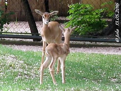 Irmi und Baby #2