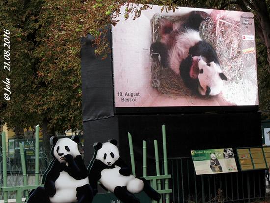 Panda-Videowall